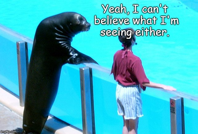 Seal gets the girl | Yeah, I can't believe what I'm seeing either. | image tagged in seal gets the girl | made w/ Imgflip meme maker