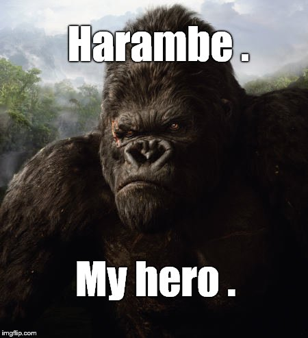 Harambe . My hero . | made w/ Imgflip meme maker