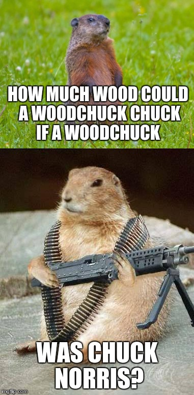 The answer is all of it | HOW MUCH WOOD COULD A WOODCHUCK CHUCK IF A WOODCHUCK WAS CHUCK NORRIS? | image tagged in woodchuck,woodchuck norris,chuck norris,memes | made w/ Imgflip meme maker