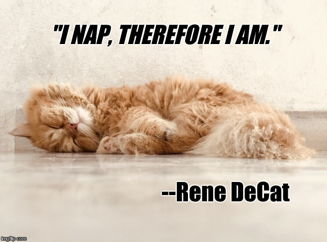 "De Cat | ""I NAP, THEREFORE I AM."" --Rene DeCat 