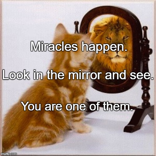 Miracles happen. You are one of them. Look in the mirror and see. | image tagged in cat mirror lion | made w/ Imgflip meme maker