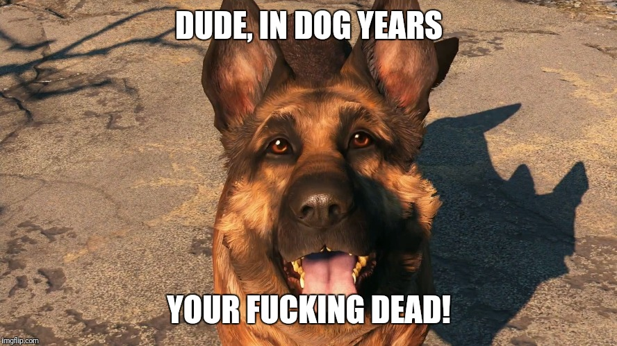 DUDE, IN DOG YEARS YOUR F**KING DEAD! | image tagged in dogmeat moon moon | made w/ Imgflip meme maker