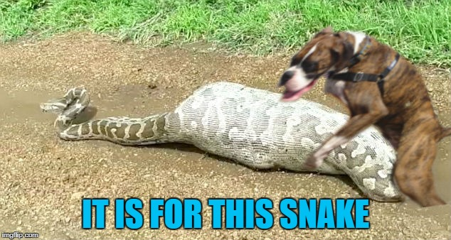 IT IS FOR THIS SNAKE | made w/ Imgflip meme maker