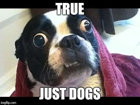 TRUE JUST DOGS | made w/ Imgflip meme maker