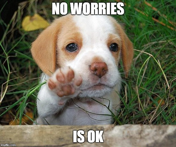 No be sad. | NO WORRIES IS OK | image tagged in dog puppy bye,it's okay,no worries | made w/ Imgflip meme maker
