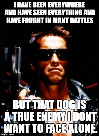 terminator arnold schwarzenegger | I HAVE BEEN EVERYWHERE AND HAVE SEEN EVERYTHING AND HAVE FOUGHT IN MANY BATTLES BUT THAT DOG IS A TRUE ENEMY I DONT WANT TO FACE ALONE. | image tagged in terminator arnold schwarzenegger | made w/ Imgflip meme maker