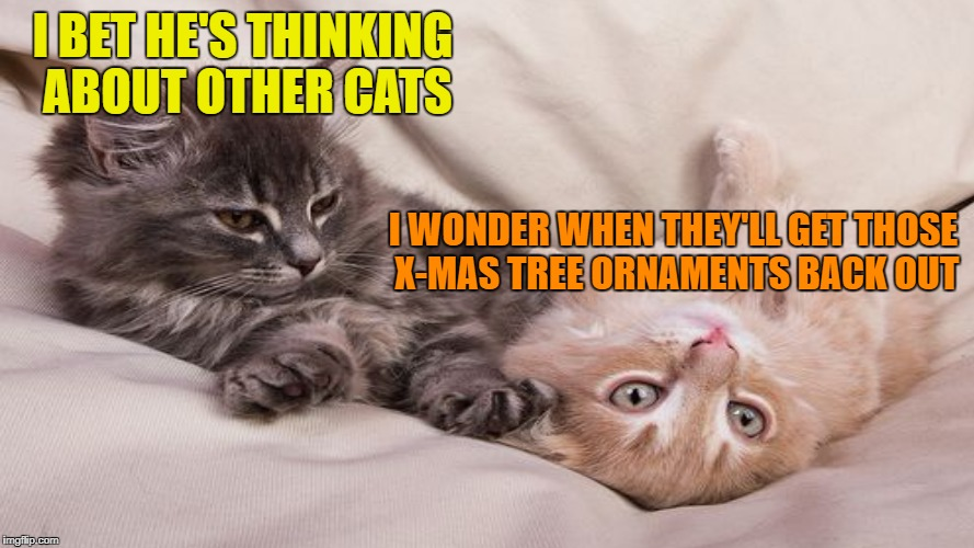 I bet he's thinking.... | I BET HE'S THINKING ABOUT OTHER CATS I WONDER WHEN THEY'LL GET THOSE X-MAS TREE ORNAMENTS BACK OUT | image tagged in funny memes,i bet he's thinking about other women,cats | made w/ Imgflip meme maker