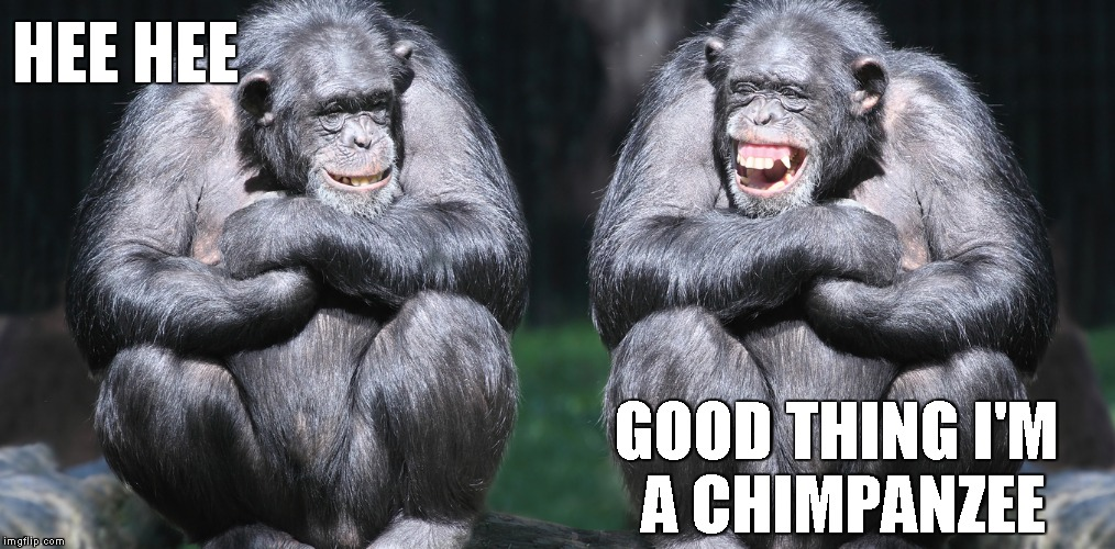 Bad Meme Good laugh | HEE HEE GOOD THING I'M A CHIMPANZEE | image tagged in bad meme good laugh | made w/ Imgflip meme maker