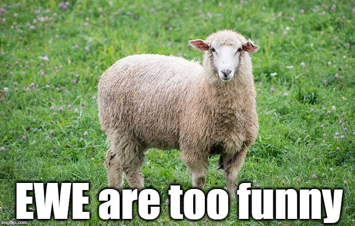 EWE are too funny | made w/ Imgflip meme maker