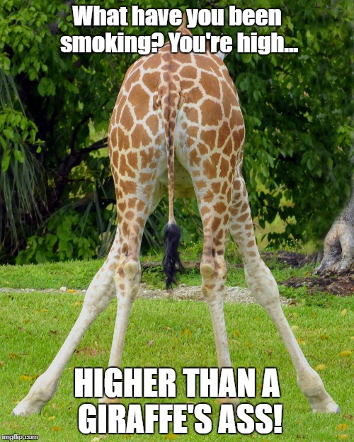 What have you been smoking? You're high... HIGHER THAN A GIRAFFE'S ASS! | image tagged in giraffe | made w/ Imgflip meme maker