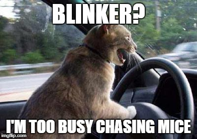 BLINKER? I'M TOO BUSY CHASING MICE | made w/ Imgflip meme maker