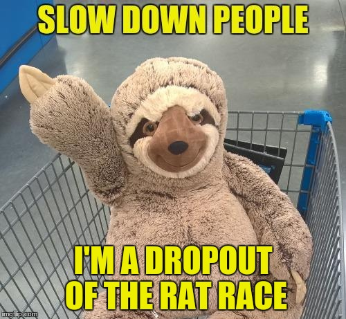 Sloth | I'M A DROPOUT OF THE RAT RACE | image tagged in slow is better | made w/ Imgflip meme maker