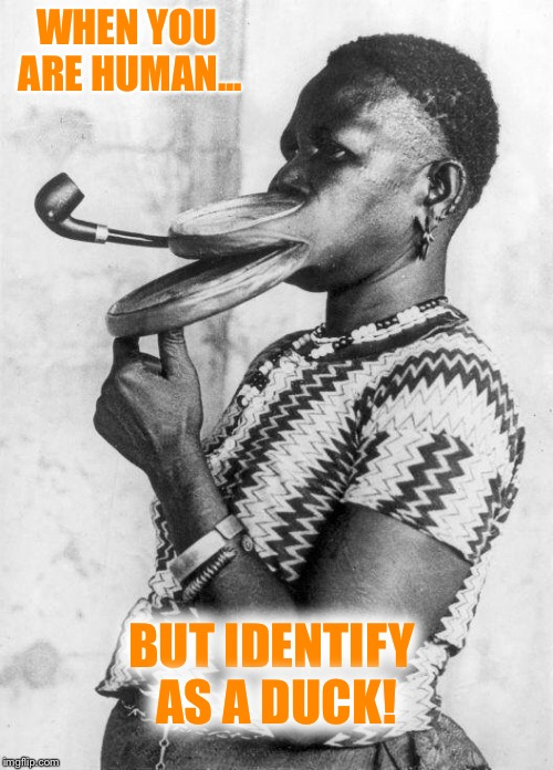 And in other news.... This person identifies more with Donald Duck than humans. | WHEN YOU ARE HUMAN... BUT IDENTIFY AS A DUCK! | image tagged in identity,duck | made w/ Imgflip meme maker