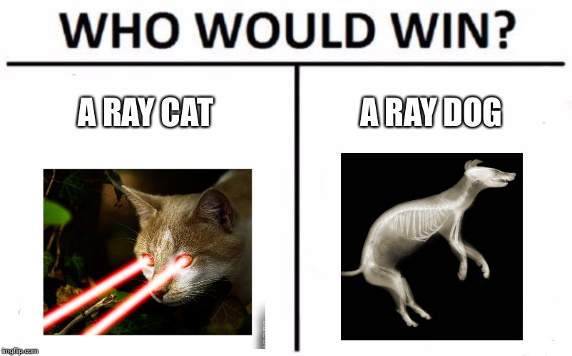 Who Would Win? Meme | A RAY CAT A RAY DOG | image tagged in memes,who would win | made w/ Imgflip meme maker