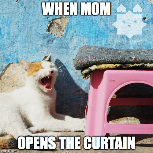 WHEN MOM OPENS THE CURTAIN | image tagged in cat,kitty,yawn,sleep,wake up,first world problems | made w/ Imgflip meme maker