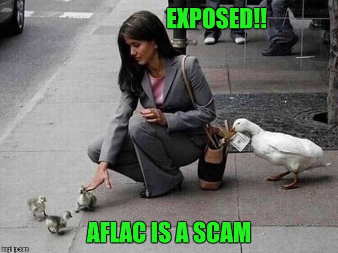 You need insurance from insurance companies | EXPOSED!! AFLAC IS A SCAM | image tagged in aflac,thief,pipe_picasso | made w/ Imgflip meme maker