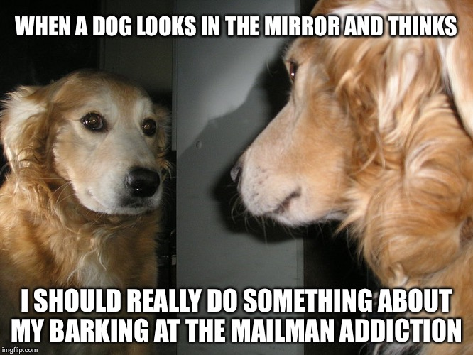 WHEN A DOG LOOKS IN THE MIRROR AND THINKS I SHOULD REALLY DO SOMETHING ABOUT MY BARKING AT THE MAILMAN ADDICTION | image tagged in mirror dog | made w/ Imgflip meme maker