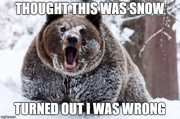 Cocaine bear | THOUGHT THIS WAS SNOW TURNED OUT I WAS WRONG | image tagged in cocaine bear | made w/ Imgflip meme maker