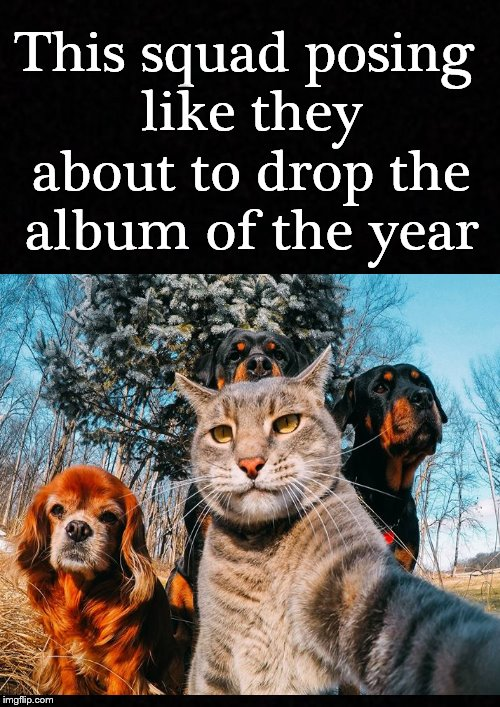 And the album of the year goes to.... | This squad posing like they about to drop the album of the year | image tagged in cat,dogs,squad,animals,pets,funny memes | made w/ Imgflip meme maker