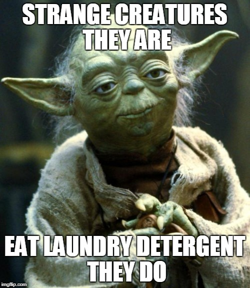 Star Wars Yoda Meme | STRANGE CREATURES THEY ARE EAT LAUNDRY DETERGENT THEY DO | image tagged in memes,star wars yoda | made w/ Imgflip meme maker