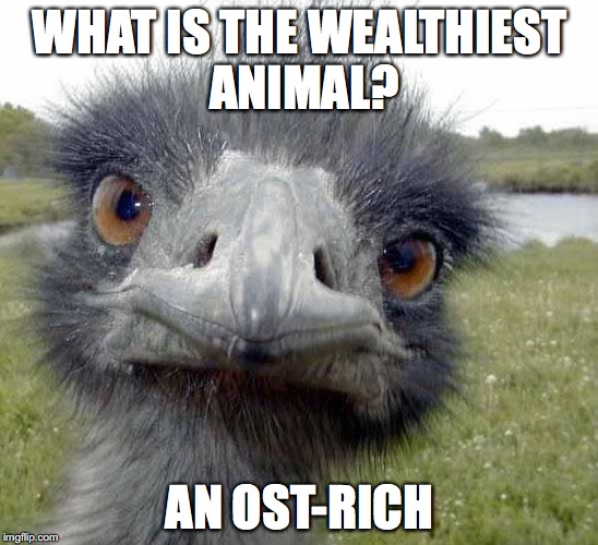 WHAT IS THE WEALTHIEST ANIMAL? AN OST-RICH | image tagged in cold stare of ostrich | made w/ Imgflip meme maker