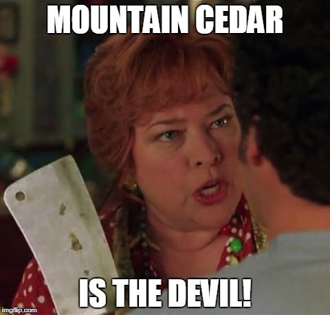 MOUNTAIN CEDAR IS THE DEVIL! | image tagged in momma | made w/ Imgflip meme maker