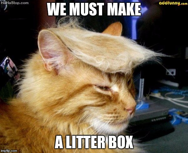 donald trump cat | WE MUST MAKE A LITTER BOX | image tagged in donald trump cat | made w/ Imgflip meme maker