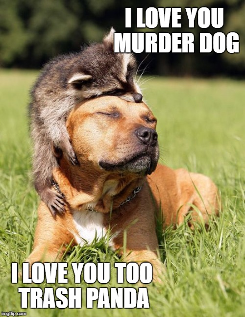 I love you murder dog |  I LOVE YOU MURDER DOG; I LOVE YOU TOO TRASH PANDA | image tagged in racoon,pit bull,murder dog,trash panda,dog | made w/ Imgflip meme maker