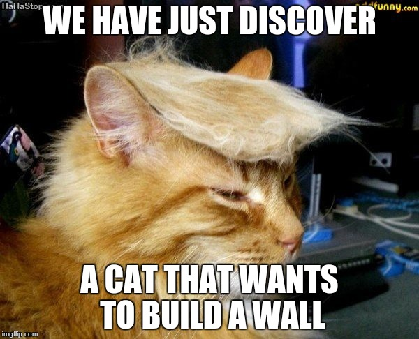 donald trump cat |  WE HAVE JUST DISCOVER; A CAT THAT WANTS TO BUILD A WALL | image tagged in donald trump cat | made w/ Imgflip meme maker