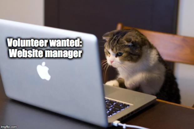 Cat using computer | Volunteer wanted: Website manager | image tagged in cat using computer | made w/ Imgflip meme maker