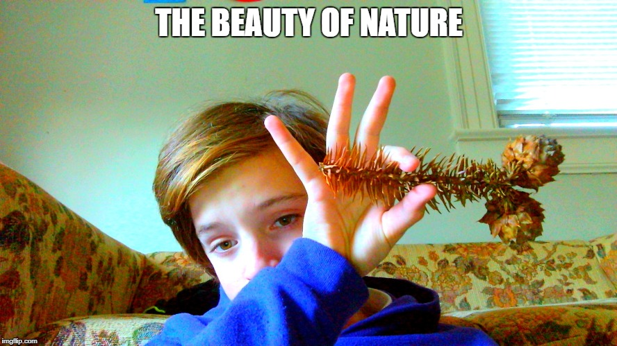 Beauty of Nature | THE BEAUTY OF NATURE | image tagged in beautiful nature,irony | made w/ Imgflip meme maker