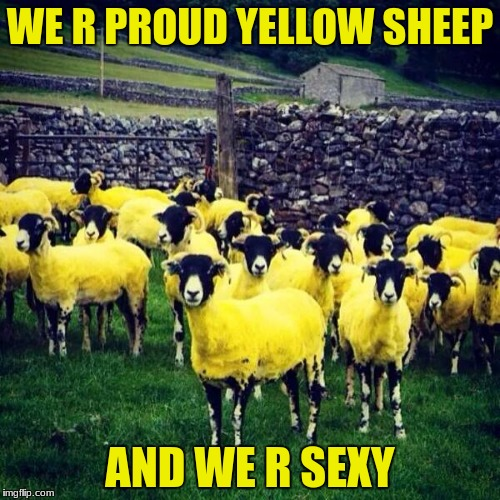 Yellow Sheep | WE R PROUD YELLOW SHEEP AND WE R SEXY | image tagged in yellow sheep | made w/ Imgflip meme maker