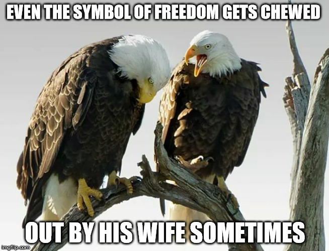 even the symbol of freedom gets chewed out by his wife | EVEN THE SYMBOL OF FREEDOM GETS CHEWED OUT BY HIS WIFE SOMETIMES | image tagged in eagle | made w/ Imgflip meme maker