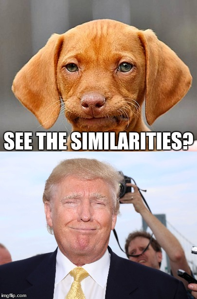 Trump meme | SEE THE SIMILARITIES? | image tagged in donald trump | made w/ Imgflip meme maker