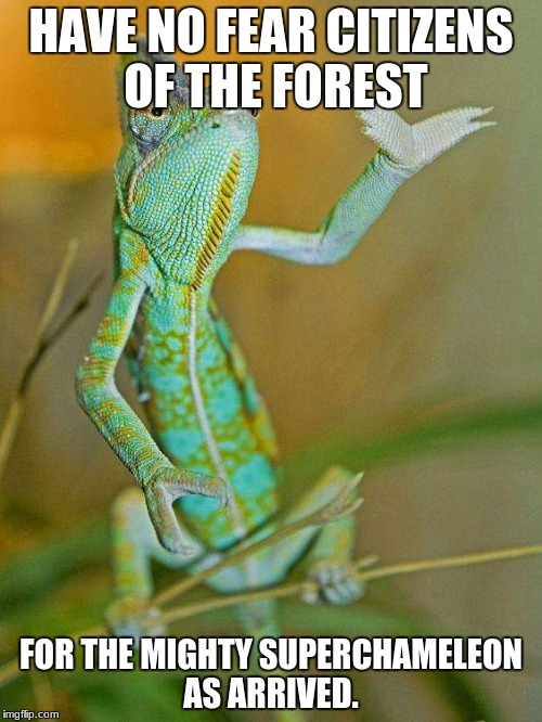HAVE NO FEAR CITIZENS OF THE FOREST FOR THE MIGHTY SUPERCHAMELEON AS ARRIVED. | image tagged in chameleon | made w/ Imgflip meme maker