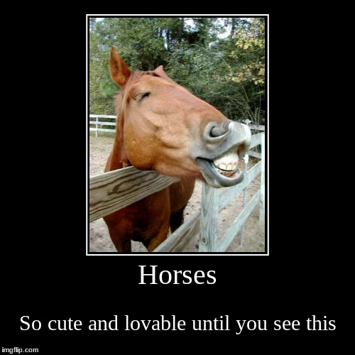 Horses | So cute and lovable until you see this | image tagged in funny,demotivationals | made w/ Imgflip demotivational maker