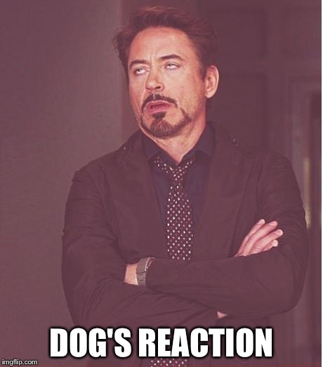 Face You Make Robert Downey Jr Meme | DOG'S REACTION | image tagged in memes,face you make robert downey jr | made w/ Imgflip meme maker