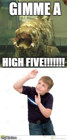 Kids these days! | GIMME A HIGH FIVE!!!!!!! | image tagged in high five,coelacanth,karate,horror,scared kid,fish | made w/ Imgflip meme maker