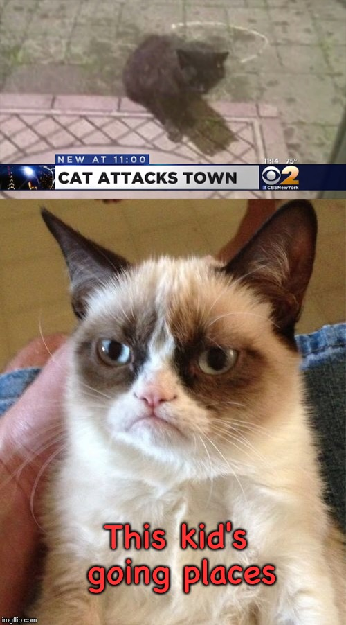 More than one grumpy cat? | This kid's going places | image tagged in memes,funny,grumpy cat,attack | made w/ Imgflip meme maker