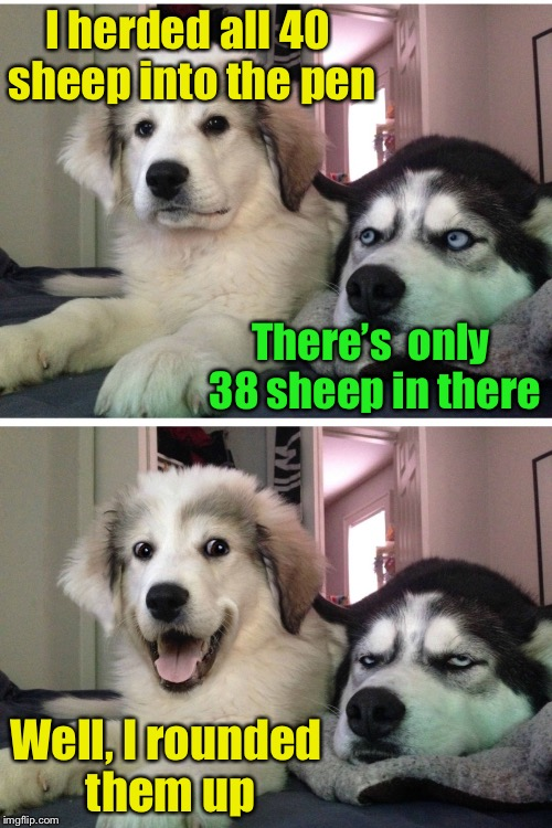Bad Pun Sheep Dogs | I herded all 40 sheep into the pen Well, I rounded them up There's  only 38 sheep in there | image tagged in bad pun dogs,memes,sheep,bad pun dog,bad pun | made w/ Imgflip meme maker