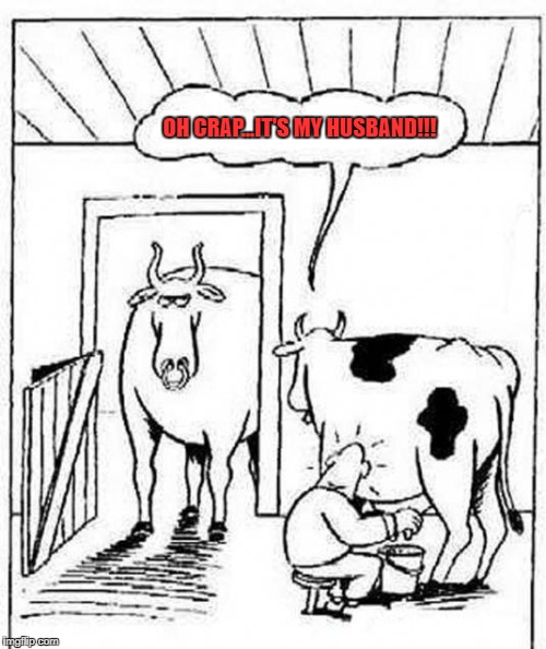 Udder ridiculousness!!! | OH CRAP...IT'S MY HUSBAND!!! | image tagged in comic cows,memes,comics,another bull's milk,funny,animals | made w/ Imgflip meme maker
