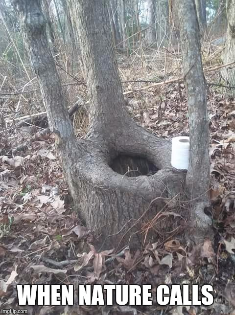 Tree N Pee | WHEN NATURE CALLS | image tagged in tree,pooping,woods | made w/ Imgflip meme maker