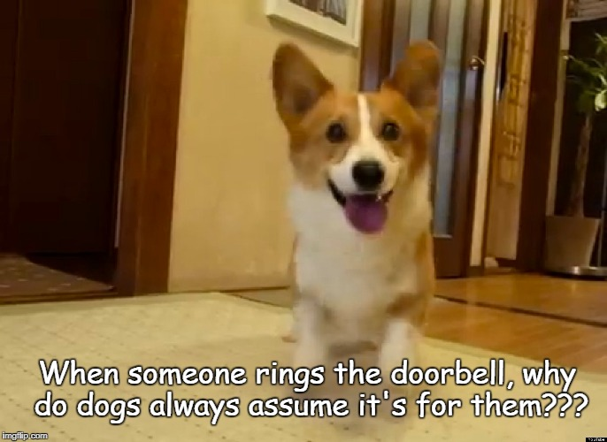 When someone rings the doorbell, why do dogs always assume it's for them??? | image tagged in doorbbell,dogs,assume,rings | made w/ Imgflip meme maker