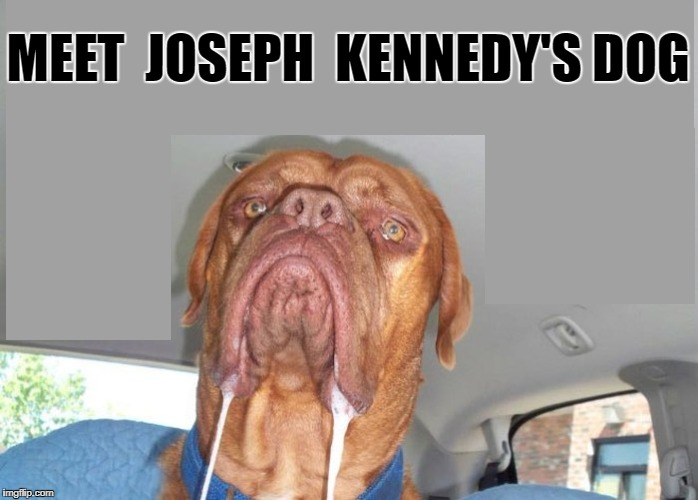 Joseph Kennedy | MEET  JOSEPH  KENNEDY'S DOG | image tagged in drooling dog,meme | made w/ Imgflip meme maker