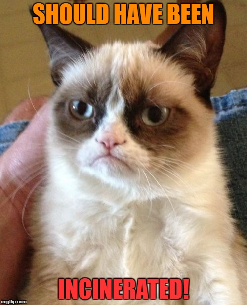 Grumpy Cat Meme | SHOULD HAVE BEEN INCINERATED! | image tagged in memes,grumpy cat | made w/ Imgflip meme maker