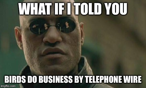 Matrix Morpheus Meme | WHAT IF I TOLD YOU BIRDS DO BUSINESS BY TELEPHONE WIRE | image tagged in memes,matrix morpheus | made w/ Imgflip meme maker