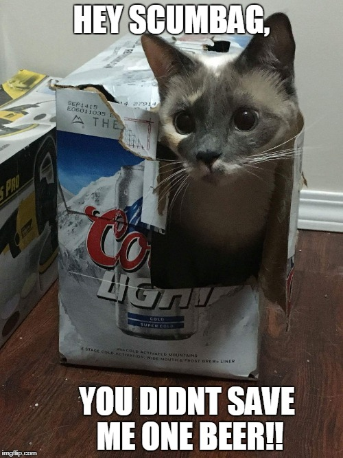 HEY SCUMBAG, YOU DIDNT SAVE ME ONE BEER!! | image tagged in cat in beer box | made w/ Imgflip meme maker