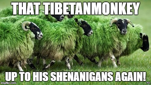 THAT TIBETANMONKEY UP TO HIS SHENANIGANS AGAIN! | made w/ Imgflip meme maker