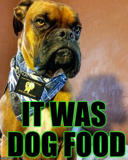 Grumpy Dog | IT WAS DOG FOOD | image tagged in grumpy dog | made w/ Imgflip meme maker