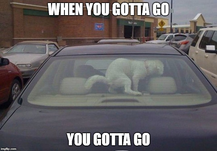 WHEN YOU GOTTA GO YOU GOTTA GO | image tagged in dog poop | made w/ Imgflip meme maker